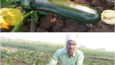 Photo of औरंगाबाद में पढ़े लिखे ग्रामीण युवाओं में खेती के प्रति बढ़ता रुझान